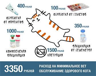 Сбор на стерилизацию и пристройство бездомных кошек Петрозаводска