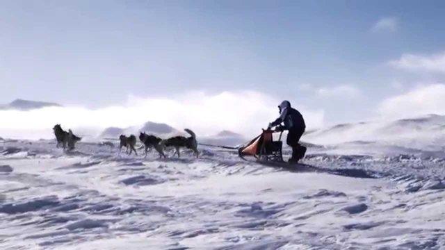 Экспедиция на собачьих упряжках Берингия 2015. Трейлер